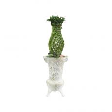 관엽식물-샹데리아-105
