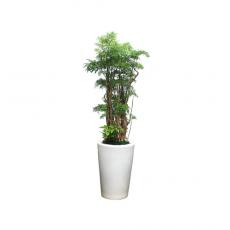 관엽식물-폴리샤스-32