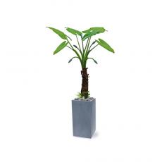 관엽식물-알로카시아-73