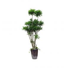 관엽식물-자마이카-79