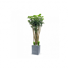 관엽식물-원폴리-84