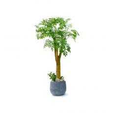 관엽식물-해피트리-91