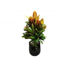관엽식물-크로톤-83
